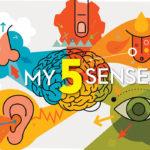 my-five-senses